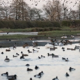 WWT Slimbridge - View from Peng observatory
