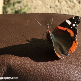 My Patch - Red Admiral