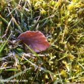 01-leaf