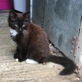 Bilbo the Kitten