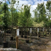 Choosing a new tree for the garden