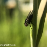 Exploring the garden for insects - Fly
