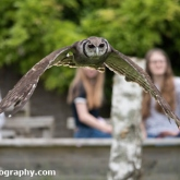 Day 15 - Visit to The Hawk Conservancy Trust