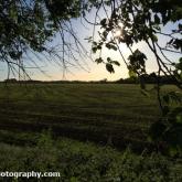 Day 3 - Lovely evening walk around a maize field