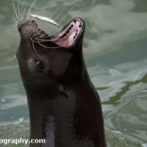 Day 12 - Longleat Safari Park - Sea Lion