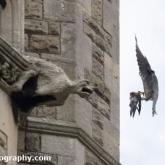 Day 13 - Peregrine Falcon - St John's RC Church, Bath