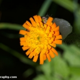 Wildlife Trusts  Lower Moor Farm - Fox-and-Cubs