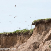 Fraisthorpe Beach - Sand Martin