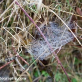 Spiders Web at Far Ings Nature Reserve