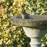 RSPB Big Garden Birdwatch - Dunnock