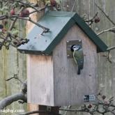 RSPB Big Garden Birdwatch - Blue tit