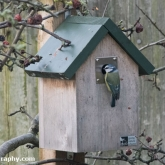 RSPB Big Garden Birdwatch - Blue tit