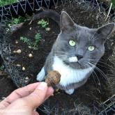 Billy dug up all the bulbs