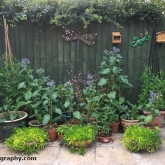 Potted plant display area