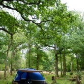 Greenfields Forest Camping