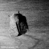 04-moth
