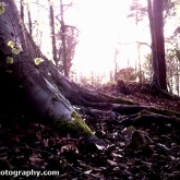 02-sunsetinwoods
