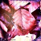 03-leaves