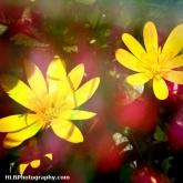 06-flowersinthewoods