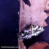 03-moth