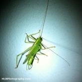 07-grasshopper