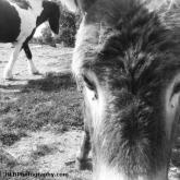 12-donkey