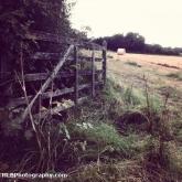 5-fields