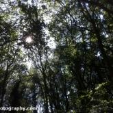 8-trees