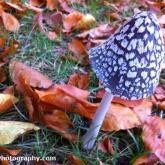 05-mushroom