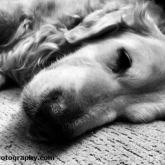 02-sleepingdog