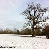 07-snowtree