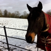 08-horse