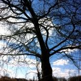 04-treeshadow