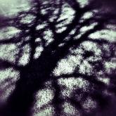 07-treeshadow