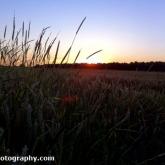 01-cornfield