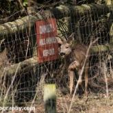 Longleat Safari Park 2016