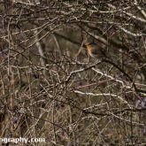 The Wildlife Trusts - Lower Moor Farm - Robin