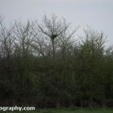 Buzzard Nest
