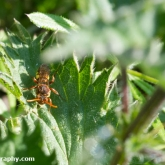 nomada sp. unknown