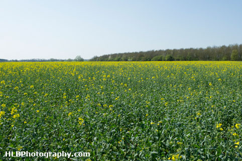 My Patch - Oilseed rape