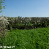 My Patch - Blackthorn