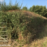 My Patch - Farmer trimmed hedge