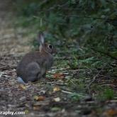 My Patch - Rabbit