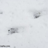 My Patch - Deer tracks
