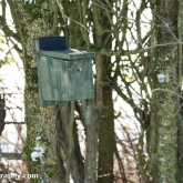 My Patch - Bird box