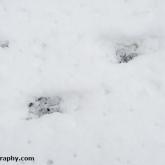 My Patch - Deer tracks