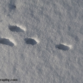 My Patch - Brown hare tracks