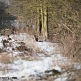 My Patch - Fallow deer
