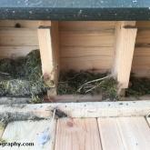 My Patch - Sparrow nesting box