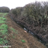 My Patch - Ditch